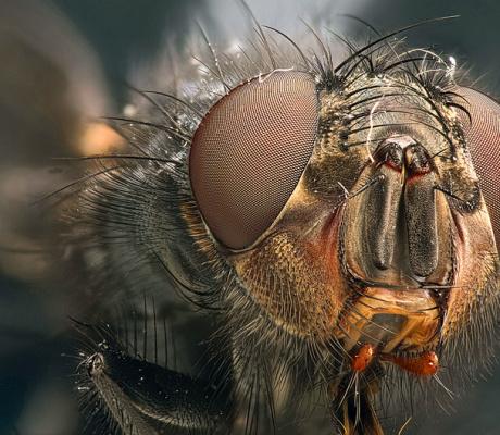 Говорящая муха